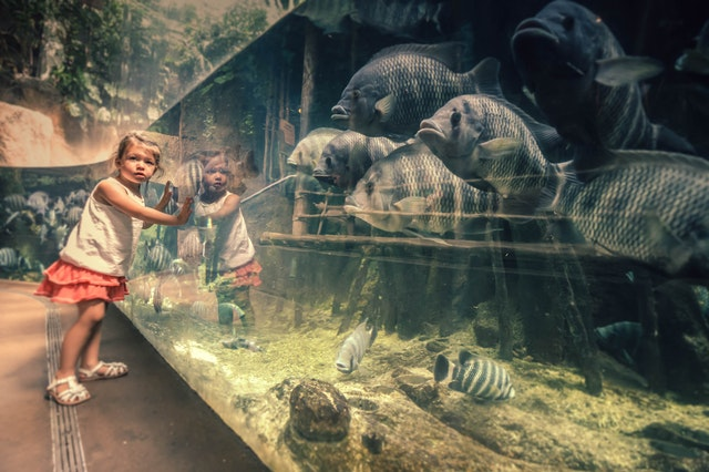 Best Zoos in Newcastle