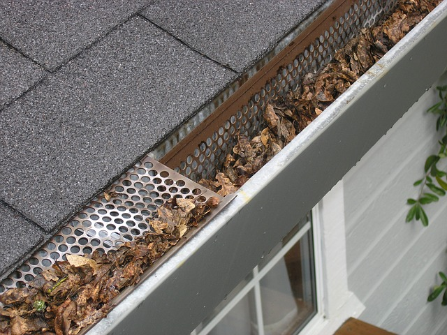 Gutter needs cleaning