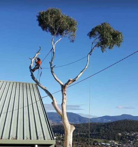 Horizon Tree Service