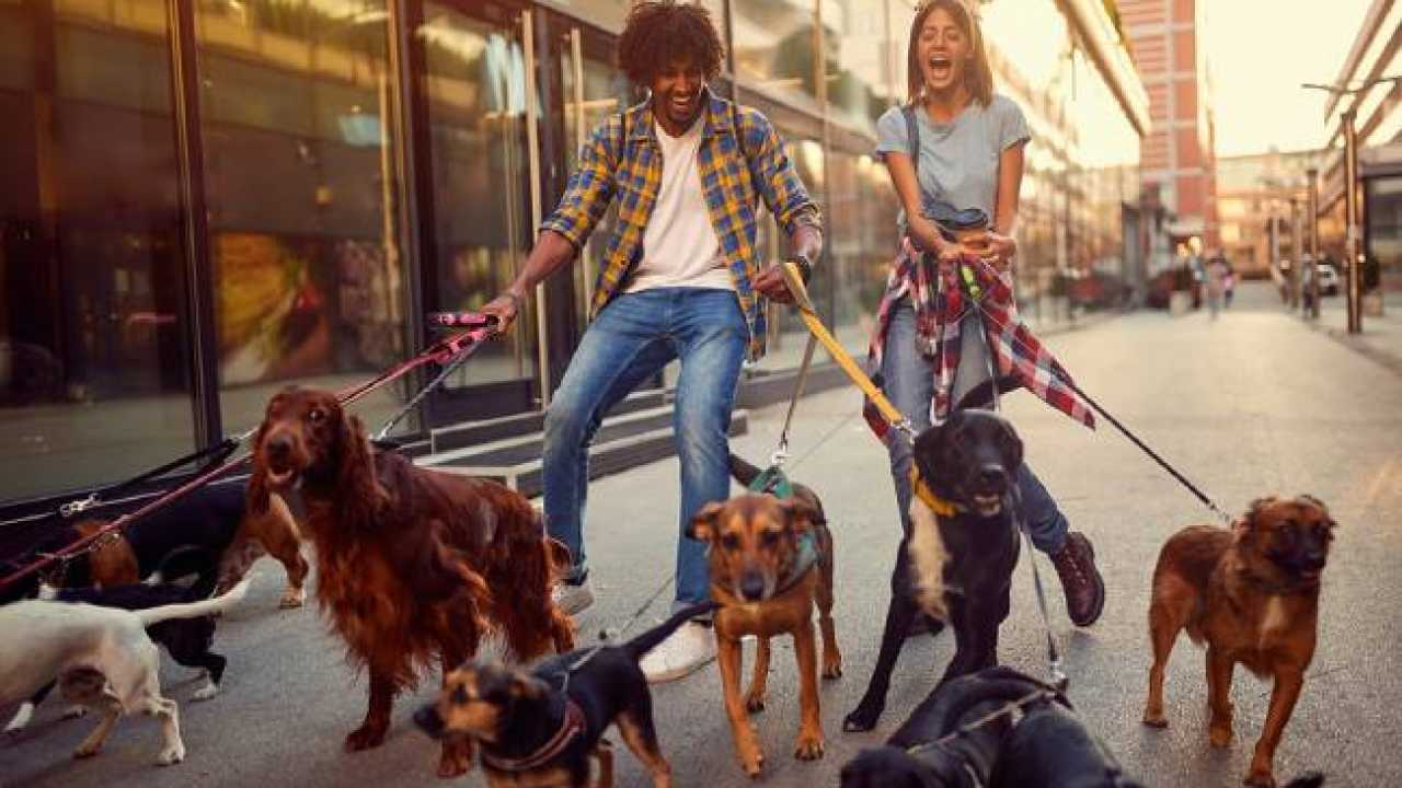 5 Best Dog Walkers in Hobart – Top Rated Dog Walkers
