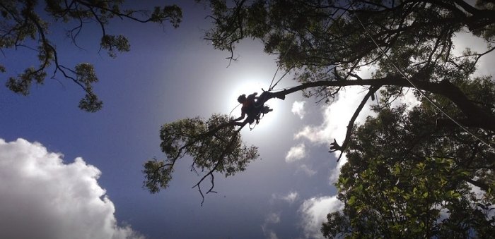 Tree Essence - Arborists & Tree Removals