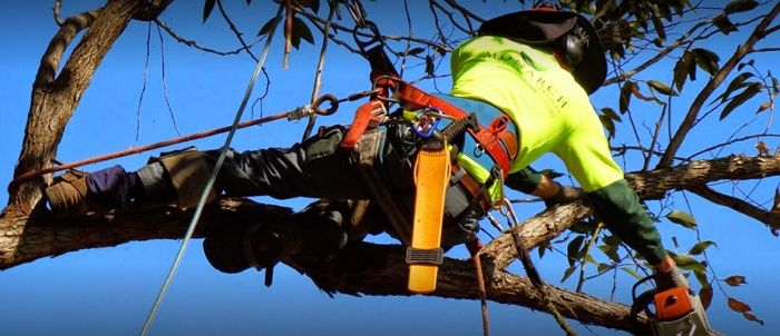 Treeline Tree Services