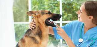 Best Pet Care Centres in Hobart