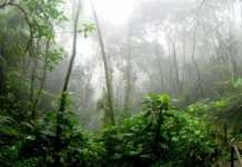 88.4% surge in Amazon rainforest destruction under Bolsonaro presidency