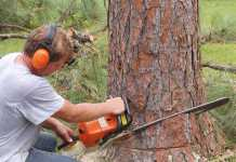 Best Tree Services in Hobart
