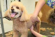 Best Dog Groomers in Newcastle
