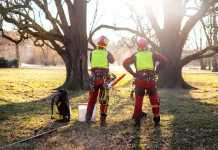 Best Arborists in Newcastle