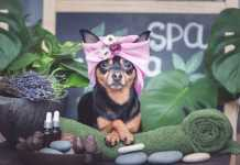 Best Dog Grooming Services in Canberra