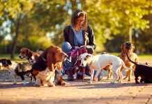 Best Dog Walkers in Canberra