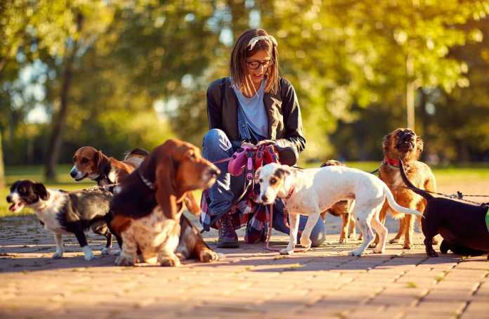 Best Dog Walkers in Canberra
