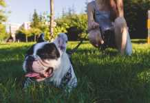 Best Dog Walkers in Gold Coast