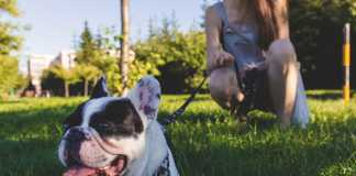 Best Dog Walkers in Gold Coast