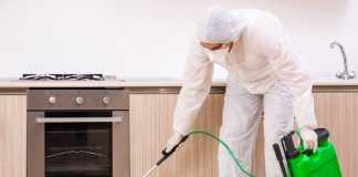 Best Pest Control Services in Canberra