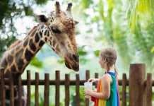 Best Zoos in Canberra