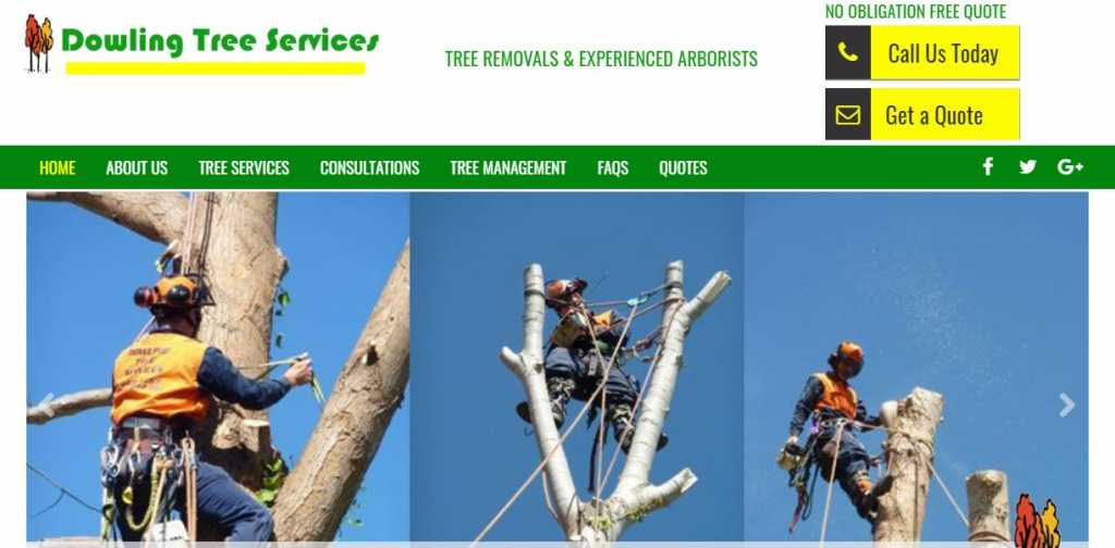 Best Tree Services in Canberra