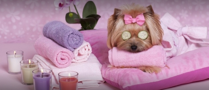Lil' Woofers Dog Grooming