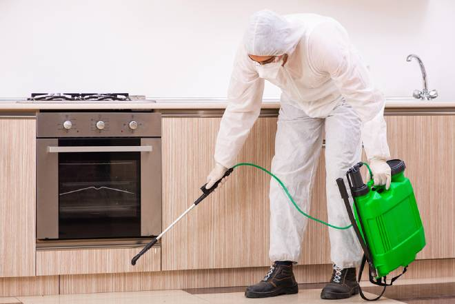 Best Pest Control Companies in Newcastle
