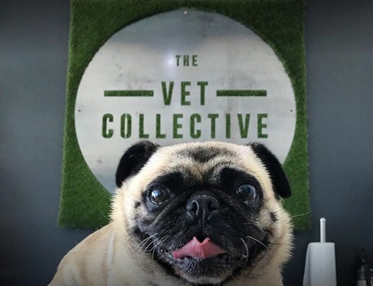The Vet Collective