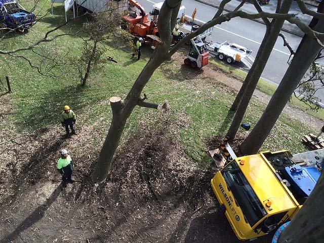 Waratah Professional Tree Care Pty Ltd