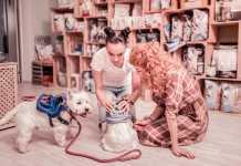 Best Pet Shops in Gold Coast