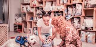 Best Pet Shops in Gold Coast