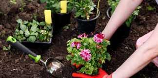 A gardener planting flowers in the garden.