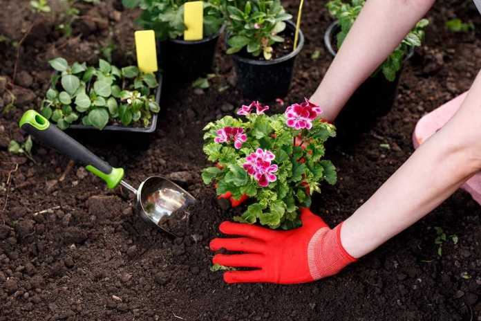 A gardener planting flowers in the garden.