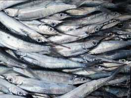 Toxic mercury levels in fish increase despite reduced emissions efforts