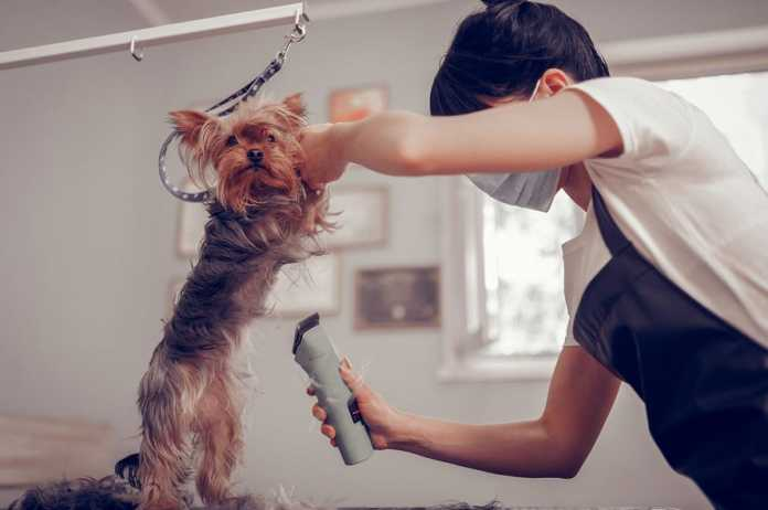 Best Dog Grooming Services in Wollongong
