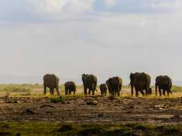 Go on a luxury African Safari!