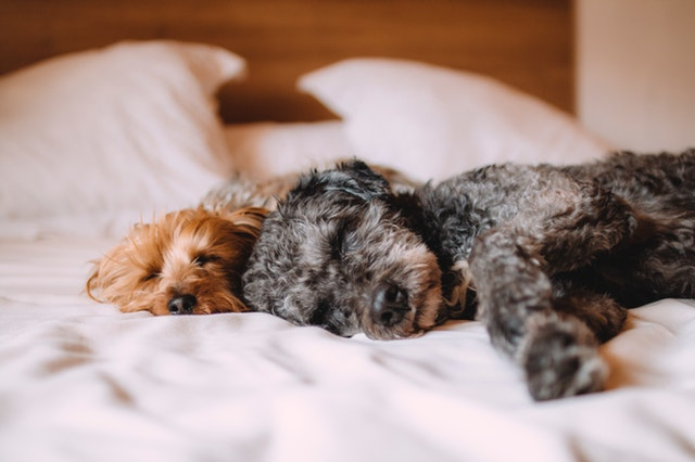 Is co-sleeping with your dog a pawsitive habit?