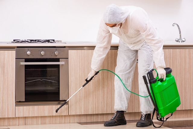 Best Exterminators in Newcastle