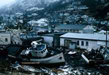 1964 Alaska earthquake linked to spread of lethal fungal disease