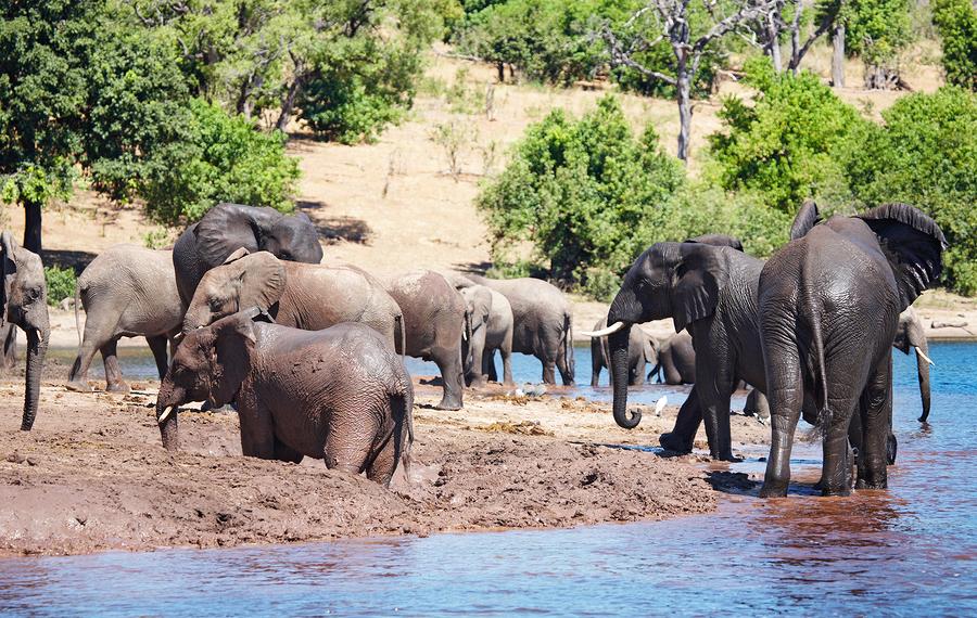 african safari - Chobe National Park, Botswana