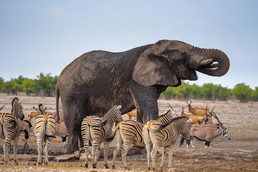 Africa Etosha National Park, Namibia