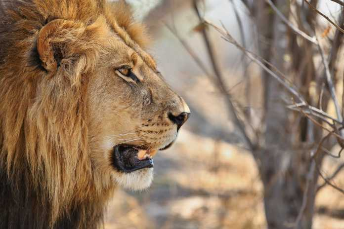 Top 5 African Safaris for Animal Lovers