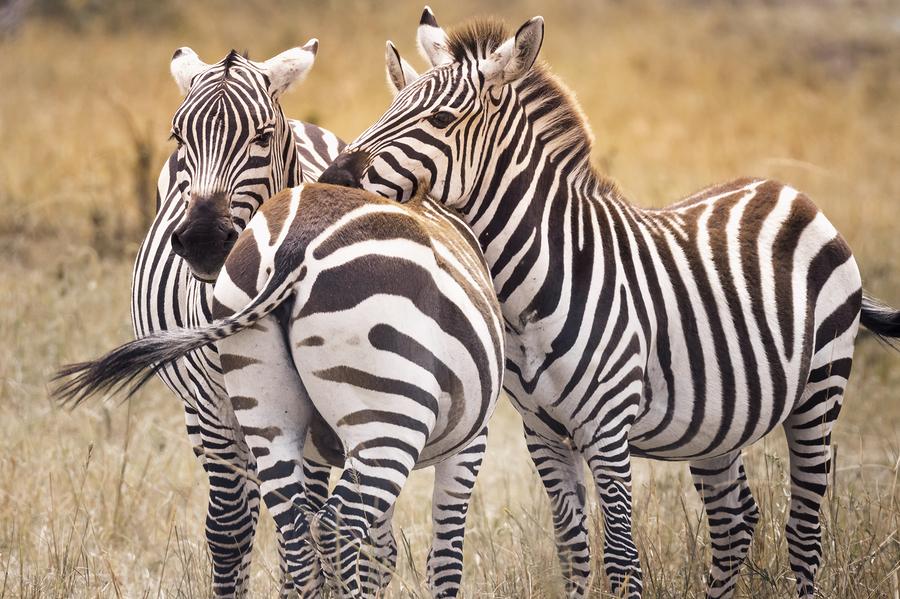 Safari Africa - Masai Mara, Kenya