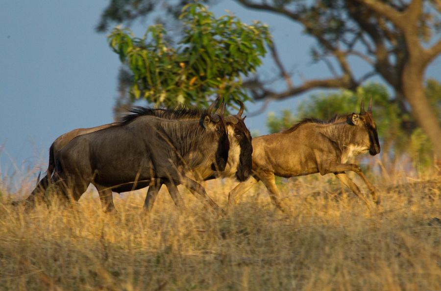 safari in Africa - Serengeti National Park, Tanzania