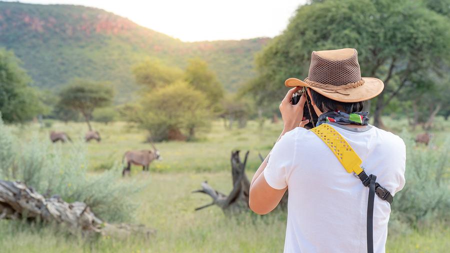 wildlife animal in African safari