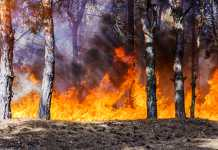 catastrophic bushfires