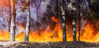catastrophic bushfires