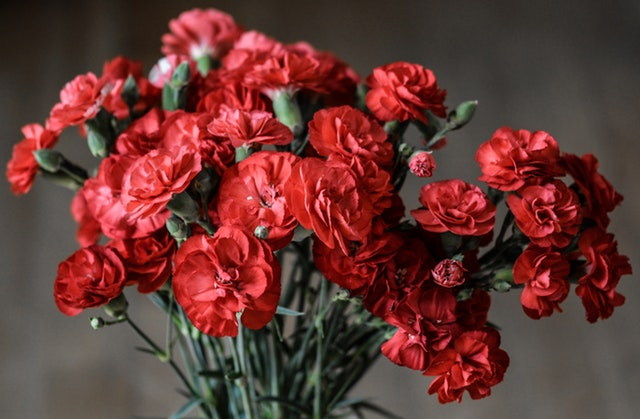 7 flower and gift ideas for your mother this mother's day carnation