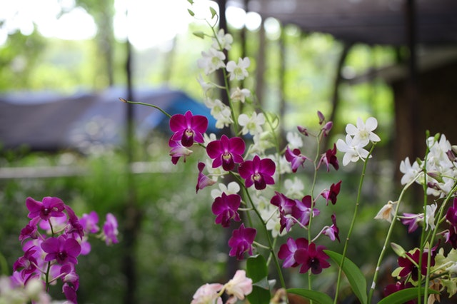 7 flower and gift ideas for your mother this mother's day orchids