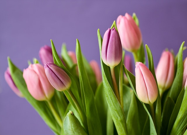 7 flower and gift ideas for your mother this mother's day tulips