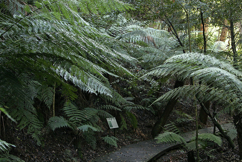 Top 10 Free Things in Canberra ACT Australian Botanic Gardens