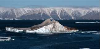 "Antarctic: ""abnormal"" 20.75C temperature recorded for the first time"