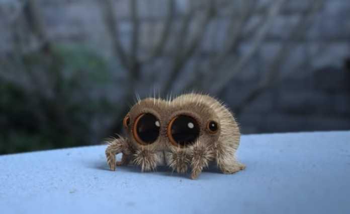 Lucas the Spider set for a Cartoon Network/Boomerang series