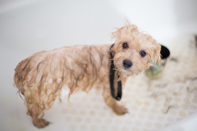 regular washing and grooming what it does to dogs