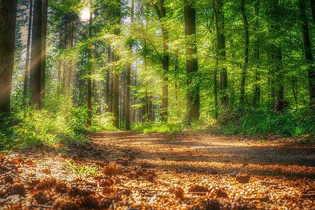Hiking Trails in Albany