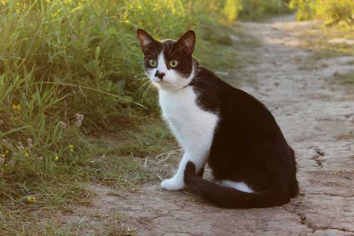 Keeping Your Cat Safe in Nature